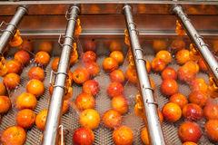 Detec Desarrollos tecnológicos - orange - cleaning - process